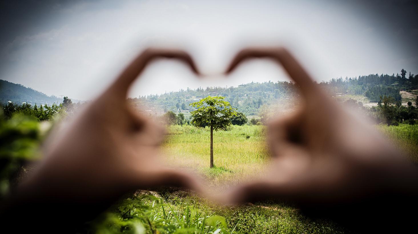 Pant på Coop blev 300 000 träd