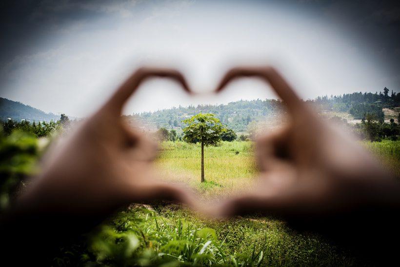 Pant från Konsum Värmlands medlemmar gav 12 021 träd