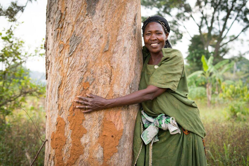 Coop-kundernas pant blev 300 000 nyplanterade träd
